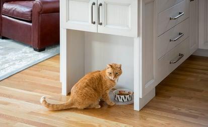 cat_in_kitchen